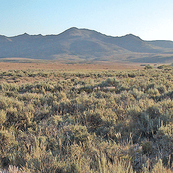 Sagebrush in front of mountains