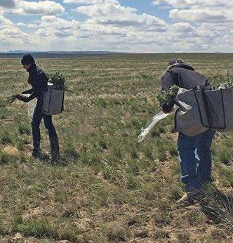 Field crew seeding grassland.