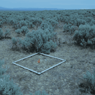 Fuels Sampling in Big Sagebrush