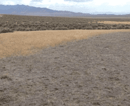 Area featuring cheatgrass dieoff