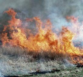 Fire burning cheatgrass