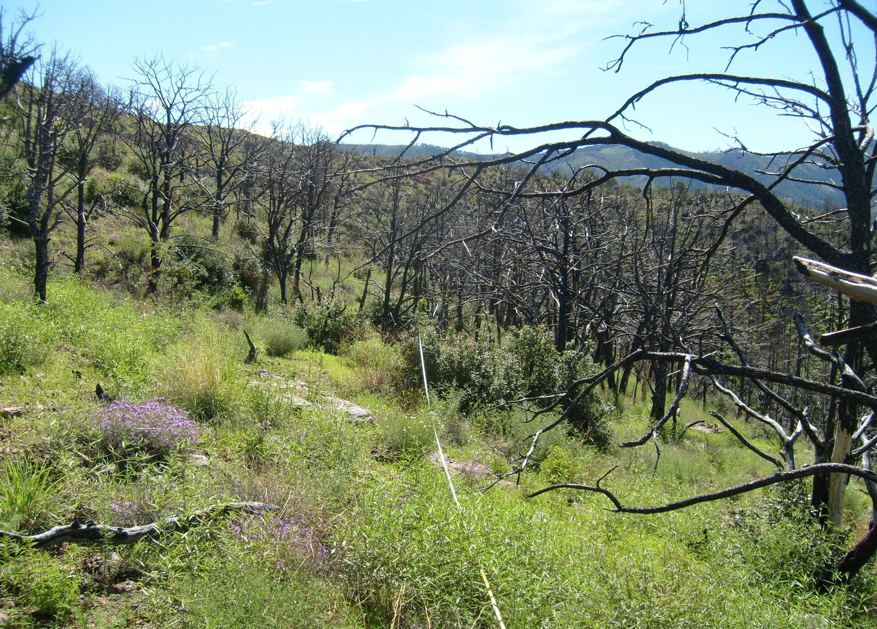 Recently burned mountain shrubland