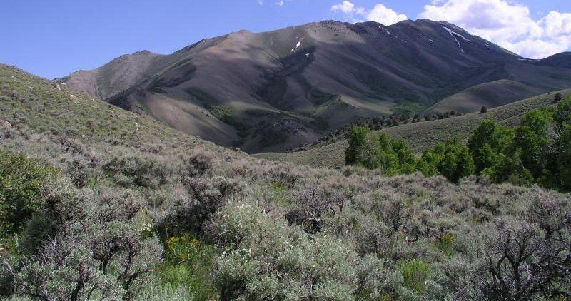 Big sagebrush grassland mtn landscape