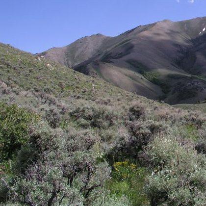Big Sagebrush Mtn Landscape