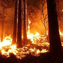 Surface forest fire