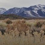Great Basin mountain scene