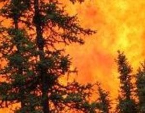 Forest crown fire