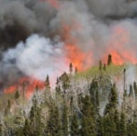 Fire burning in mixed deciduous and conifer forest