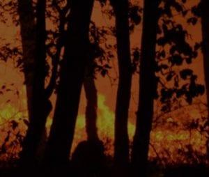 Glowing orange forest fire