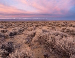Sagebrush sunset
