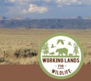 Working Lands for Wildlife logo